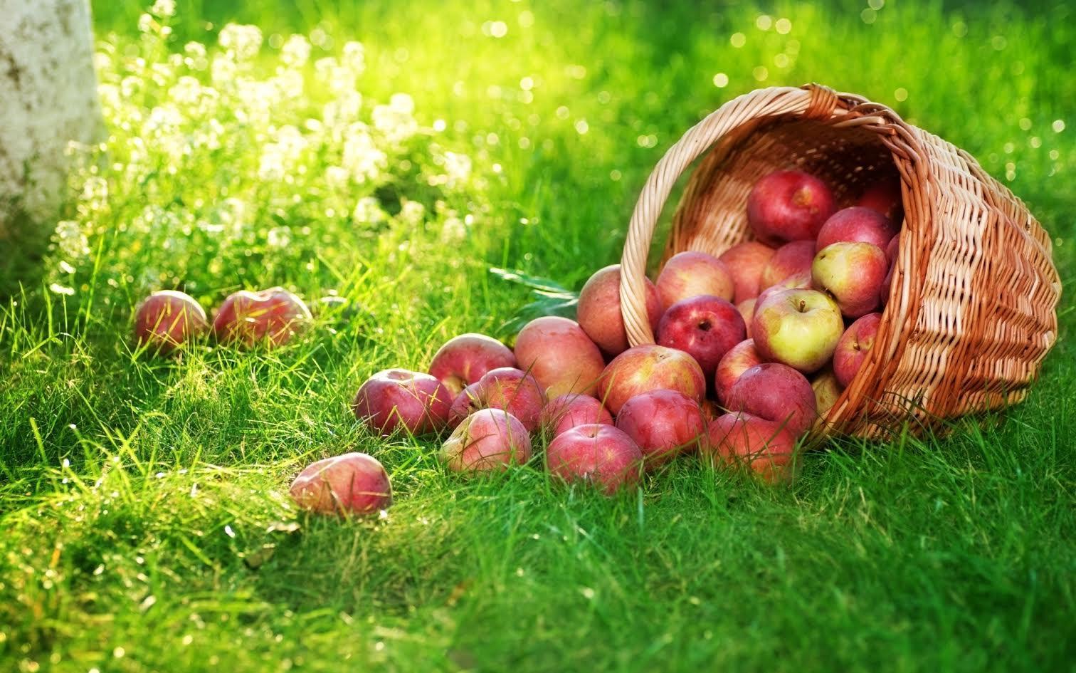 Картинки по запросу яблочный спас