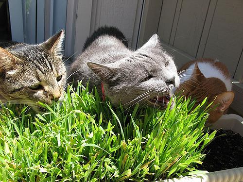 Коты трава лето