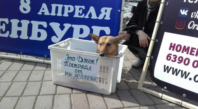 В Оренбурге митинговали зоозащитники
