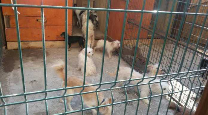 Оренбург в квартире 26 собак