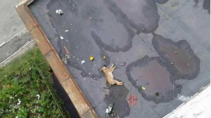 мужчина выбросил щенка с 12 этажа
