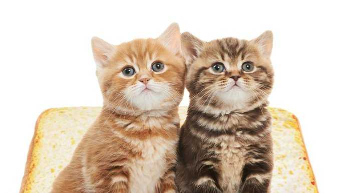 Котики на хлебушке