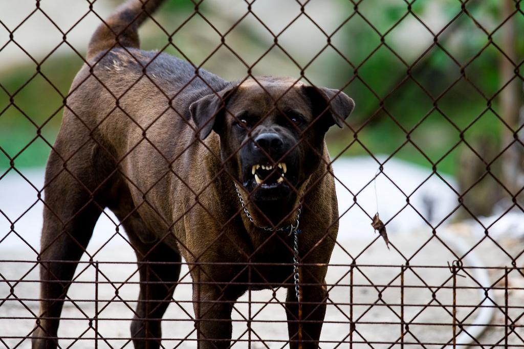ВОренбурге патрульный автомобиль ссиреной преследовал… собаку