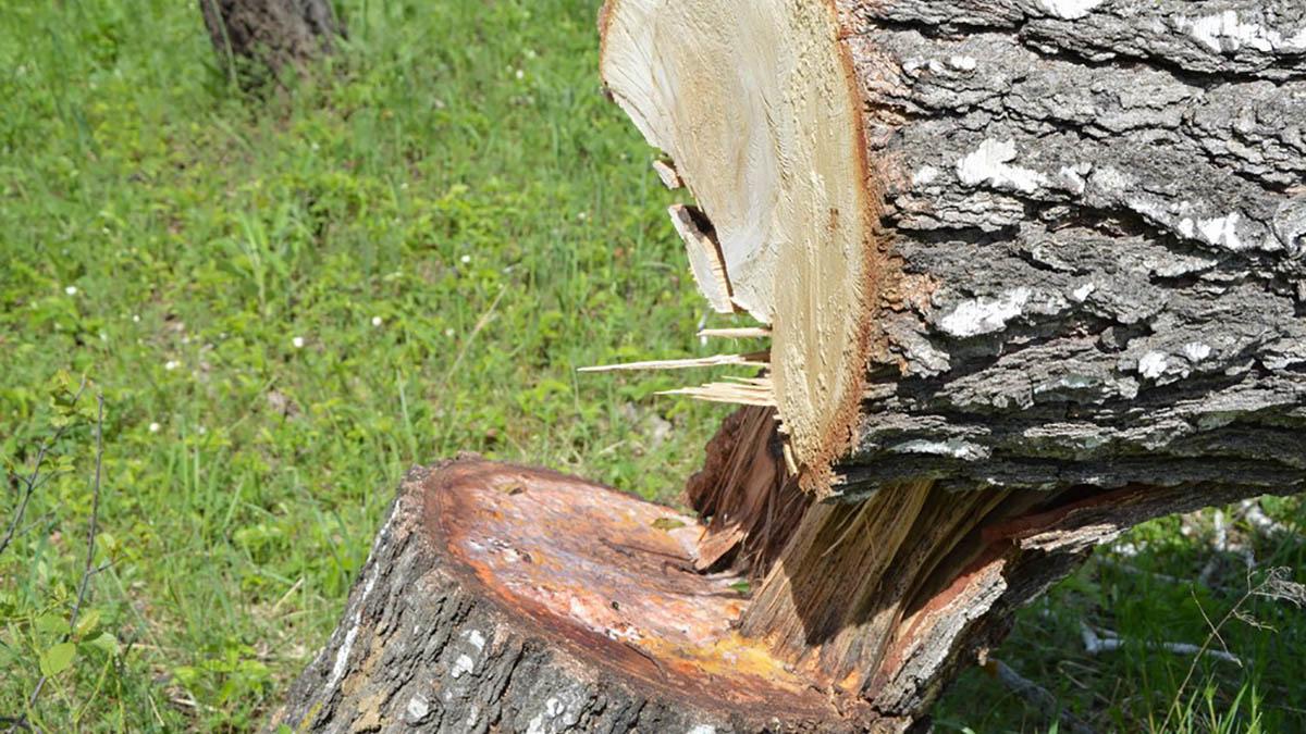 Рубка пилка дровосек
