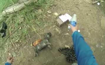 Вьетнамец спас щенка, сделав ему вентиляцию лёгких бутылкой