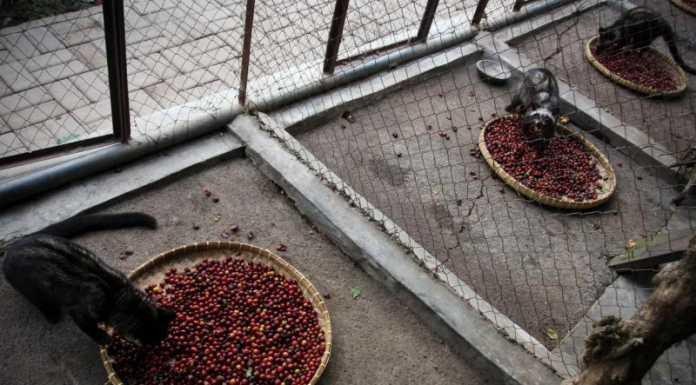Какую неприглядную тайну хранят производители элитного кофе в мире?