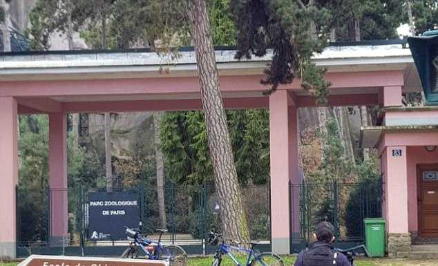 Из парижского зоопарка сбежали 50 бабуинов и прорвались в город