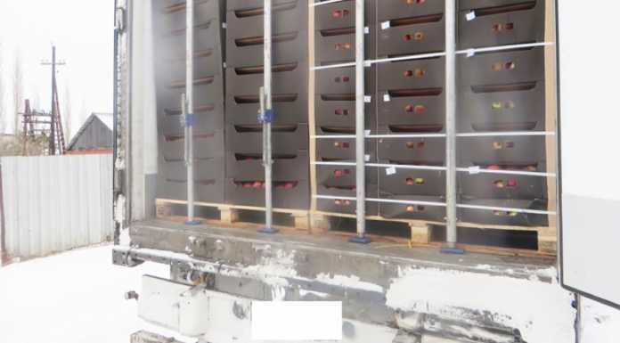 В Оренбуржье уничтожили 20 тонн запрещённых к ввозу в Россию польских яблок