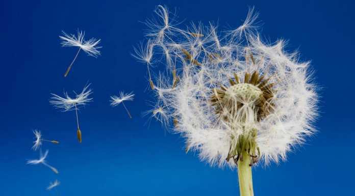 Пыльца, цветок