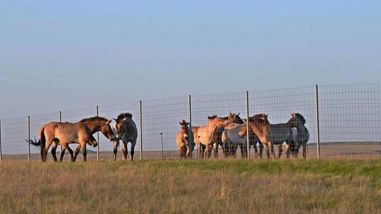 Заповедник «Оренбургский» выпустил в степь третью группу лошадей