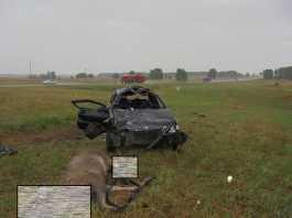 В ДТП под Оренбургом погибли пассажир автомобиля и лось