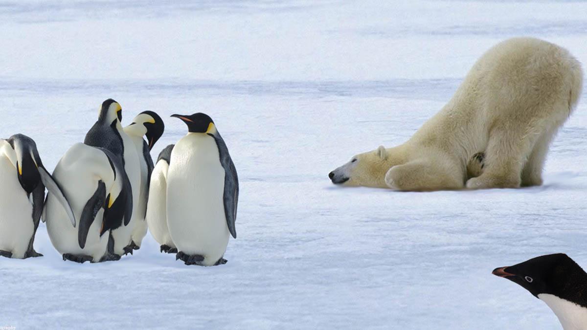 Белый медведь и пингвины