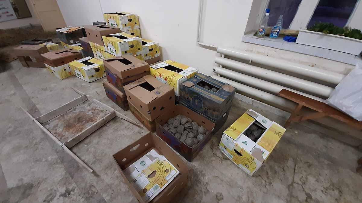 В гараже на улице Просторной силовики нашли черепах на 9 млн рублей