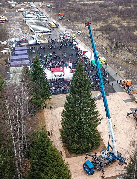Рубка главной новогодней елки страны в Московской области